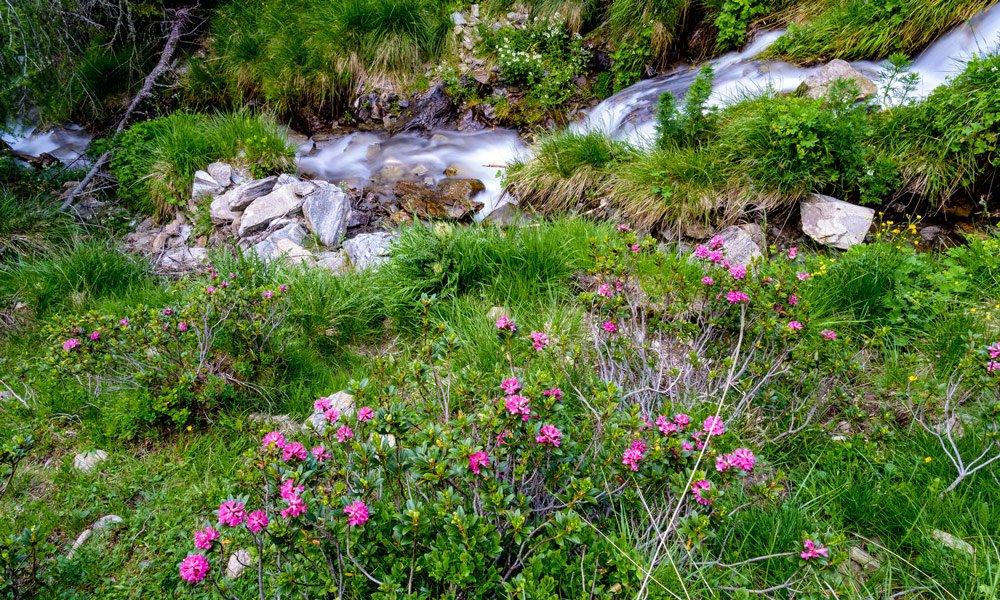 Spring at Plan de Corones / Val Pusteria